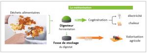 Infographie arbre, méthanisation : valorisation des matières organiques